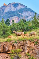 Deer in group at top of cliffs with large mountains in the distance