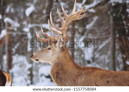 Deer in profile. Deer. Deer near. #1557758084