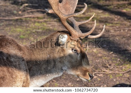 deer in the forest in Germany near falkenstein  #1062734720