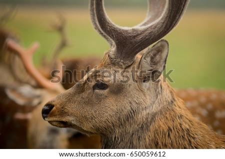 deer in the reserve #650059612