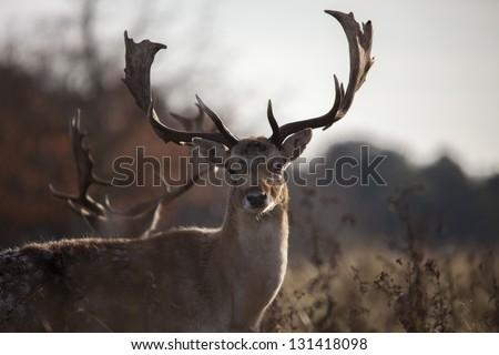 deer in the wild park #131418098