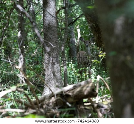 Deer in the woods #742414360