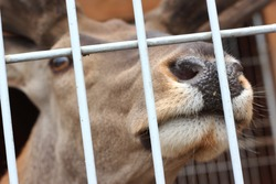 deer nose in a zoo cage