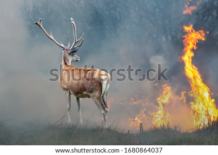 Deer on a background of burning forest. Wild animal in the midst of fire and smoke stock photo