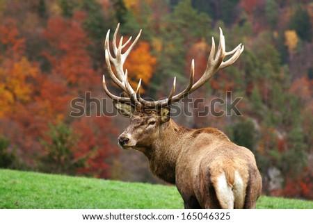 Deer On