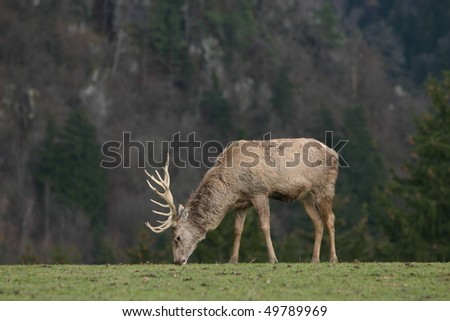 deer on meadow