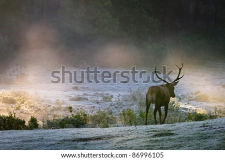Deer on the foggy meadow at sunrise