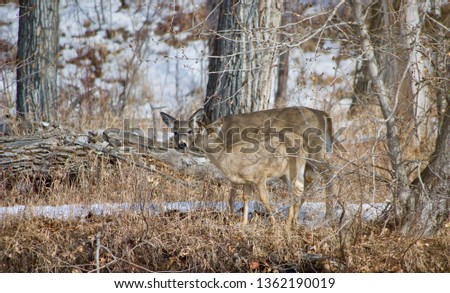 Deer Picture in The Forest - Wildlife