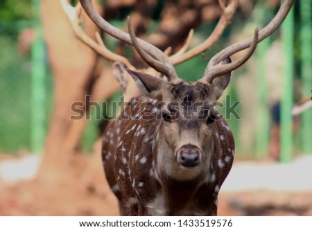 deer portrait stock photo Deer close up stock photo full Hd portrait.jpg