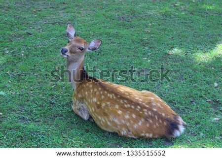 Deer posing for the picture in Nara, Japan.