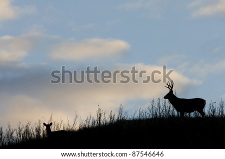 Deer Silhouette Saskatchewan Canada Mule Deer Hills