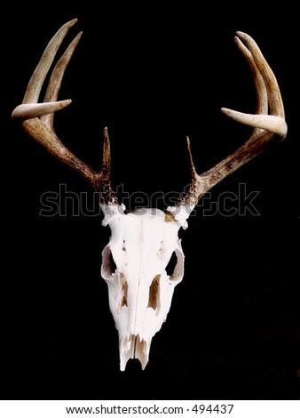 Deer Skull Logo Design Picture