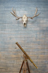 Deer skull with antler on the wooden wall and a metal antique telescope on a tripod. Interior details and decor in a room with hunting prey. Wall in a hunter's house with a deer skull.