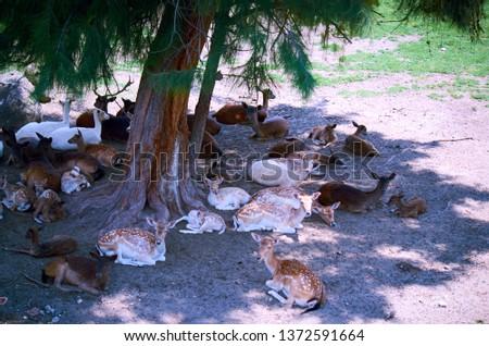 Deer Stags Life #1372591664