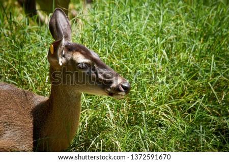 Deer Stags Life #1372591670