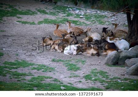 Deer Stags Life #1372591673