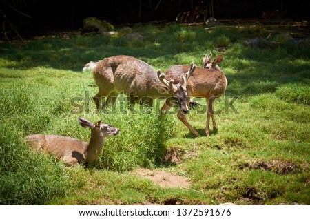 Deer Stags Life #1372591676