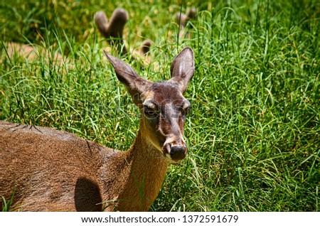 Deer Stags Life #1372591679