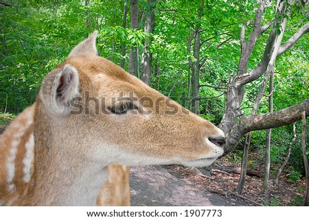 Deer standing in the woods