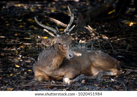 deer stay and sleep. long...
