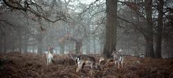 Deer Upon Winters Bronze