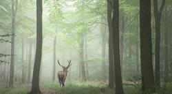 deer walking in autumn forest