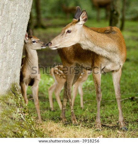 deer with her fawn in the forest