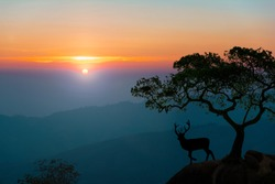 Deer with stags standing at the top of rock with mountains and forest in the background, landscape with silhouettes..