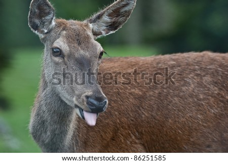 Deer with tong #86251585