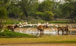 Deers and birds, Bharatpur Bird Sanctuary