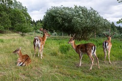 deers in the green grass