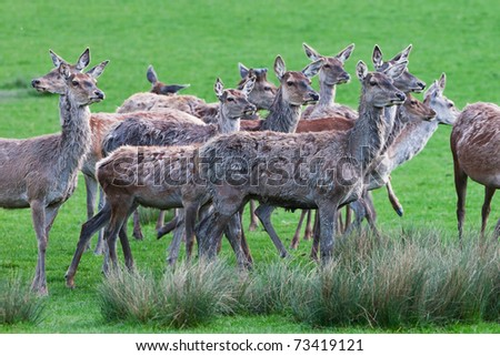 Deers on a field #73419121