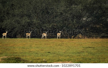 Deers on the field #1022891701