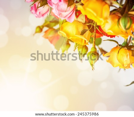 Defocus blur bright spring flowers - roses on sunrise background with color filters