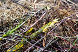 Defocus Broken branch in the forest. Harm to the environment. Spring cleaning in the garden. Heap of branches of fruit trees with light green spots, twigs of bushes, hay, dry grass. Out of focus.