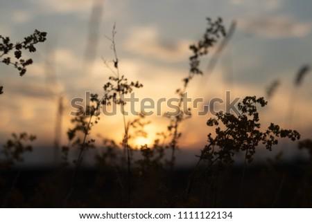 defocus, field grass on evening sky background, sunset #1111122134