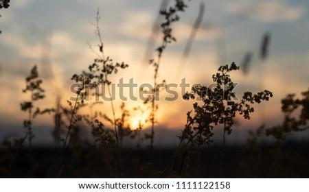 defocus, field grass on evening sky background, sunset #1111122158