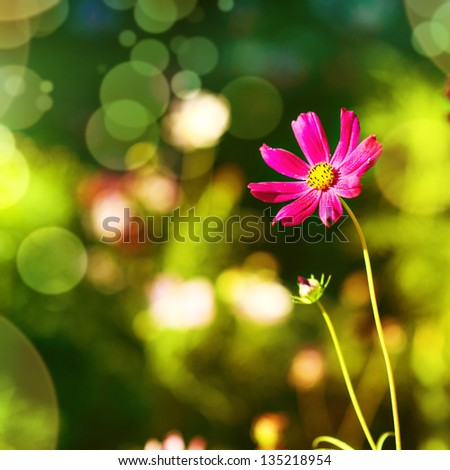 Defocus green natural background with  beautiful purple flower outdoor