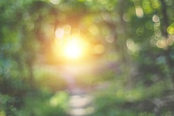 Defocus tunnel of Nature green leaves on blurred greenery tree background and sunlight bokeh