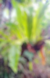 defocused abstract background is parasites attached to the orange tree right in front of the house