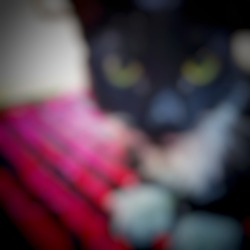 Defocused abstract background of blackwhite cat.