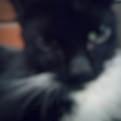 Defocused abstract background of blackwhite cat