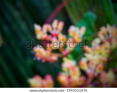 defocused abstract background of flower red natural and leaf green