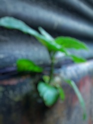 Defocused abstract background of green leaves attached to the wall