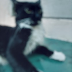 Defocused abstract background of shocked blackwhite cat.