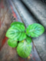 Defocused abstract background of small green plants attached to the wall