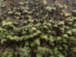 Defocused abstract background plant that grows attached to a rock