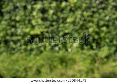 Defocused and blurred image for background of green bush