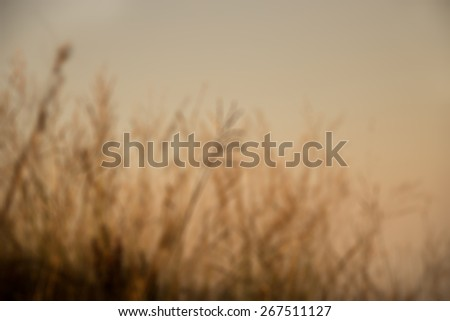 Defocused and blurred image for background of sunset back lighting through dry plants. (Warm tone)