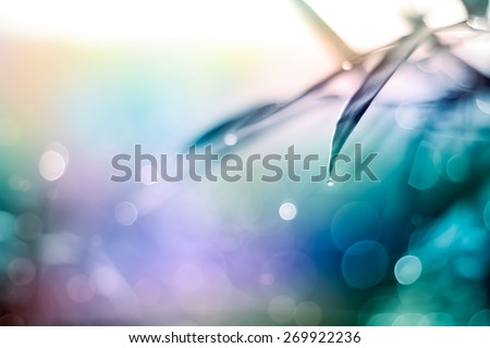Defocused Bokeh, twinkling lights vivid color blurred bokeh abstract light spring forest background. Natural bokeh from bamboo leaf. Blur picture and soft style.